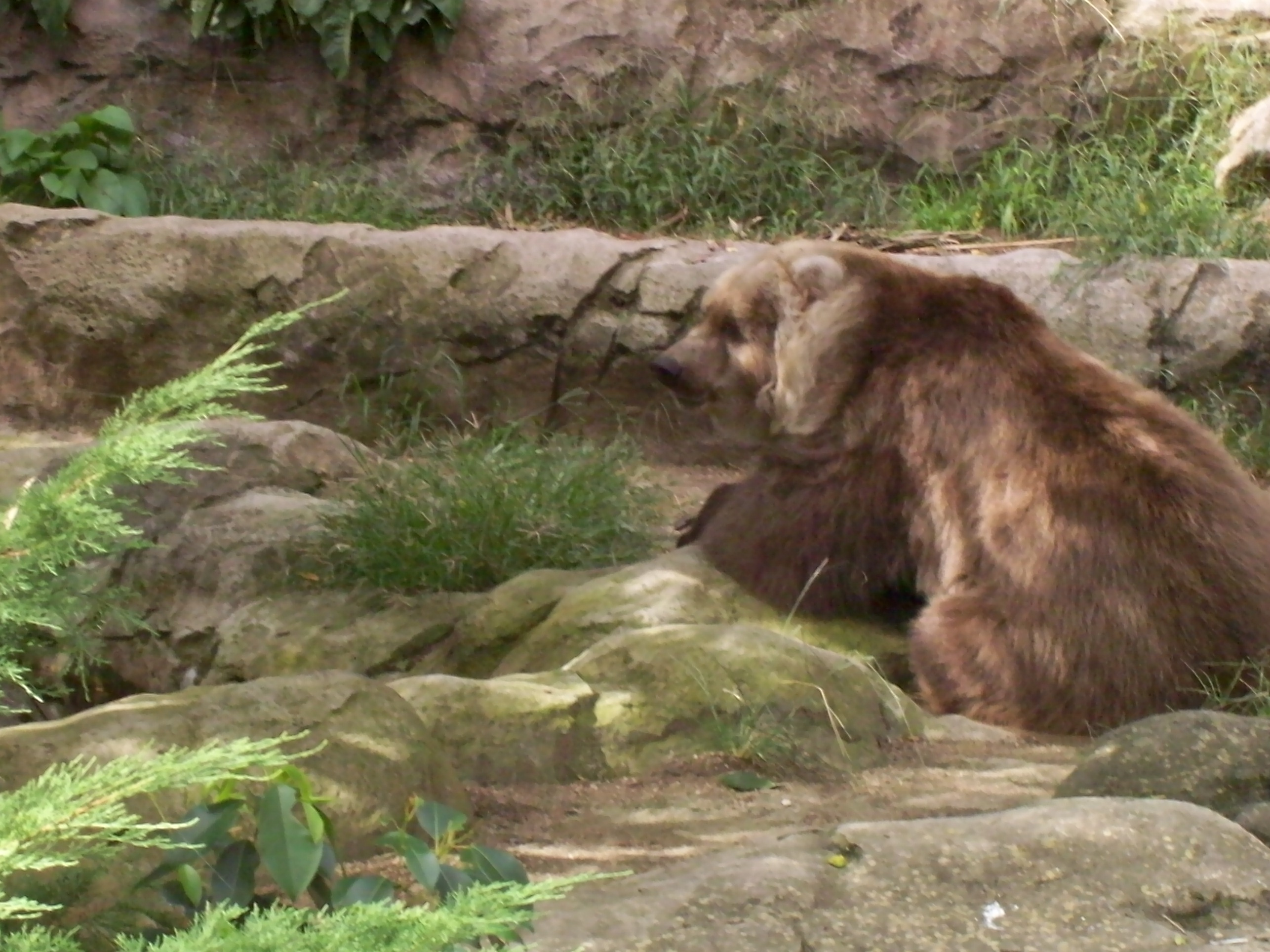 The bear!